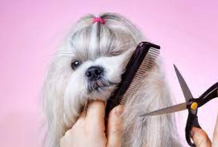 Understand the need for grooming your pet