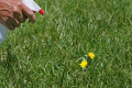 What is the right way to handle pesticides, insecticides and herbicides? And how to handle them?